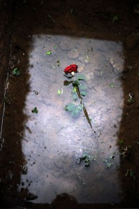 Freshly Dug Grave Flower Rose at Srebrenica Genocide Memorial