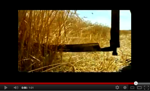 Barilla dove sta il confine fra favola e inganno d i s for Da dove proviene il grano della barilla