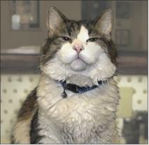 Oscar il gatto