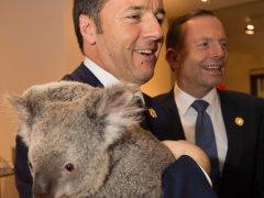 renzi-koala